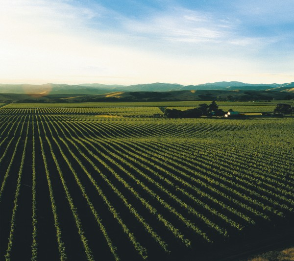 Montana began planting its first vineyard, Brancott Estate, in 1973 and the company continues to dominate production in the region.