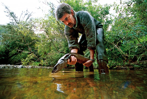 NIWA scientist Ben Chisnall releases a tagged longfin eel into a stream at Mt. Bruce National Wildlife Centre, Wairarapa. Thirty eels have been tagged in an effort to better understand the breeding dynamics and mortality of the species, which has come under increasing pressure from fishing and habitat loss.