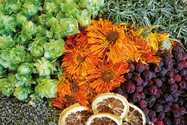 Autumn harvest (clockwise from top left): dried hops (a natural somnorific), calendula flowers, rosemary, hawthorn berries, oranges, chaste berry seeds. Easy to grow and simple to prepare, such common plants form an aromatic basis for home-based natural health care.