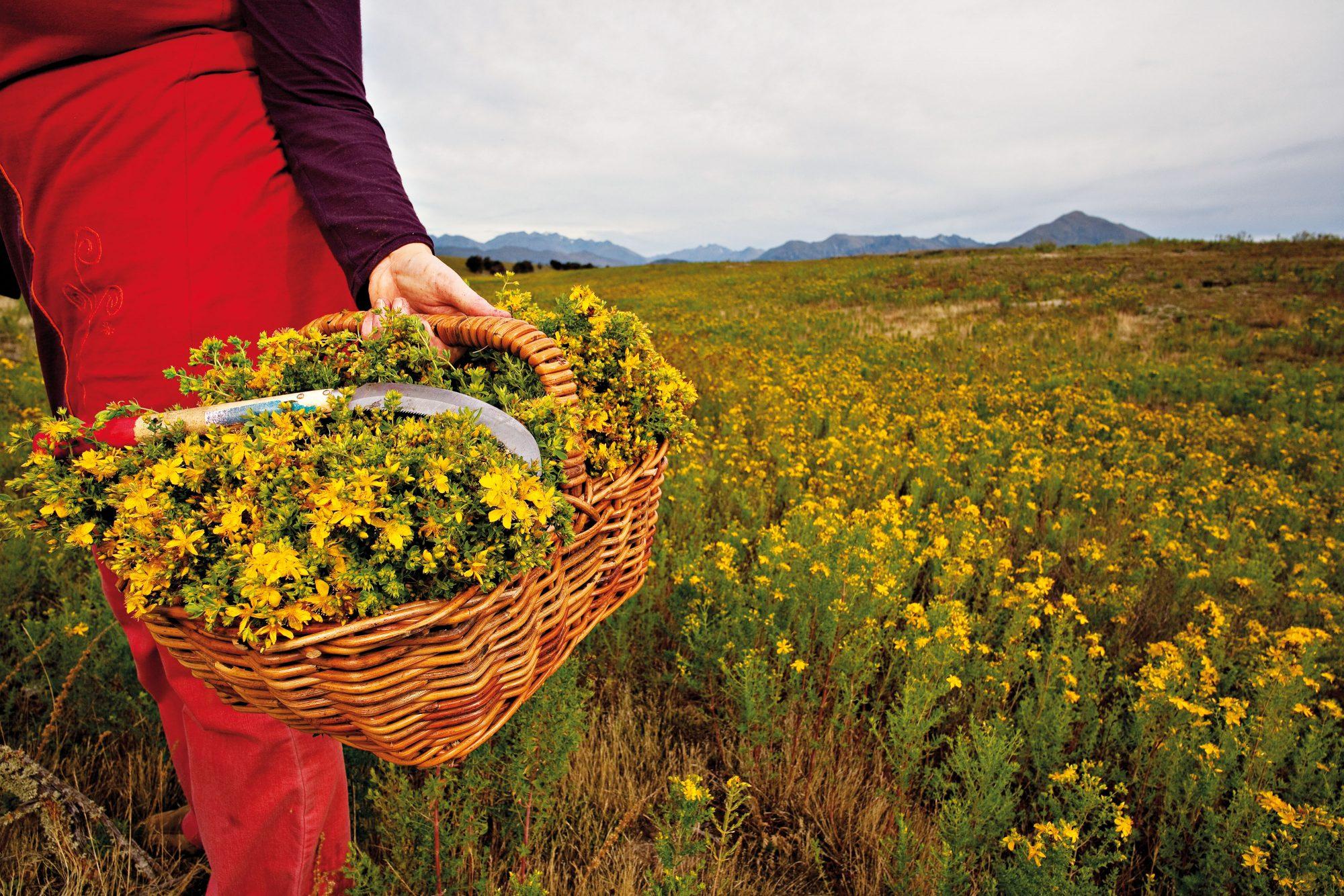 Fields Of Plenty New Zealand Geographic