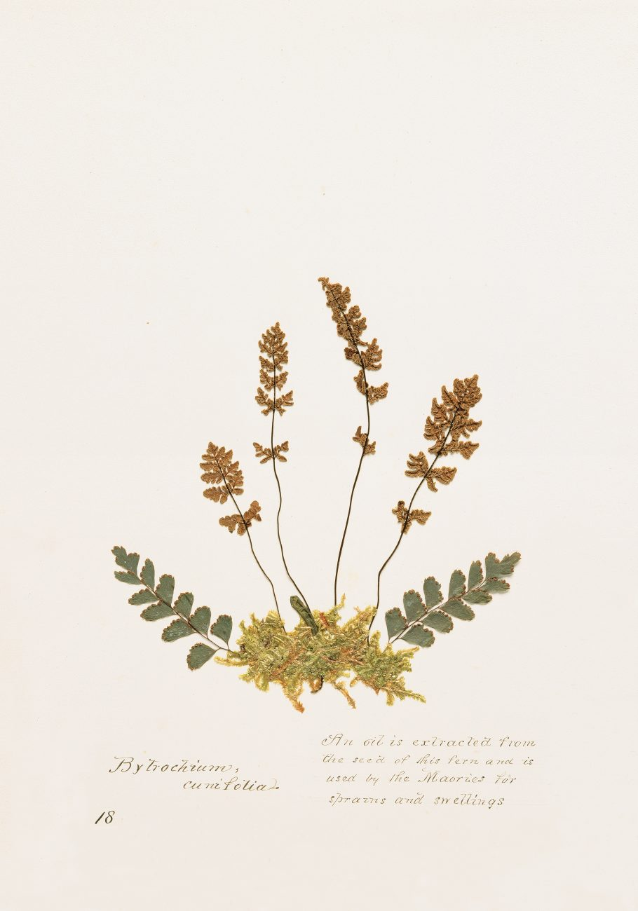 111_herbs_sidebar2