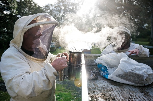 "Terry and Karlene Shaw-Toomey gather honey by hand from a hive in their ocean-facing pohutukawa grove. Smoke ""keeps the bees busy while we get the honey,"" Karlene explains. ""They respond as if there was a real fire, gorging on honey and exiting the hive."" Karlene and Terry are as passionate about bees as they are honey. ""A lot of people have questions on the health of bees,"" Karlene says, ""and realistically, bees are probably more important to our ecology than anything else."""