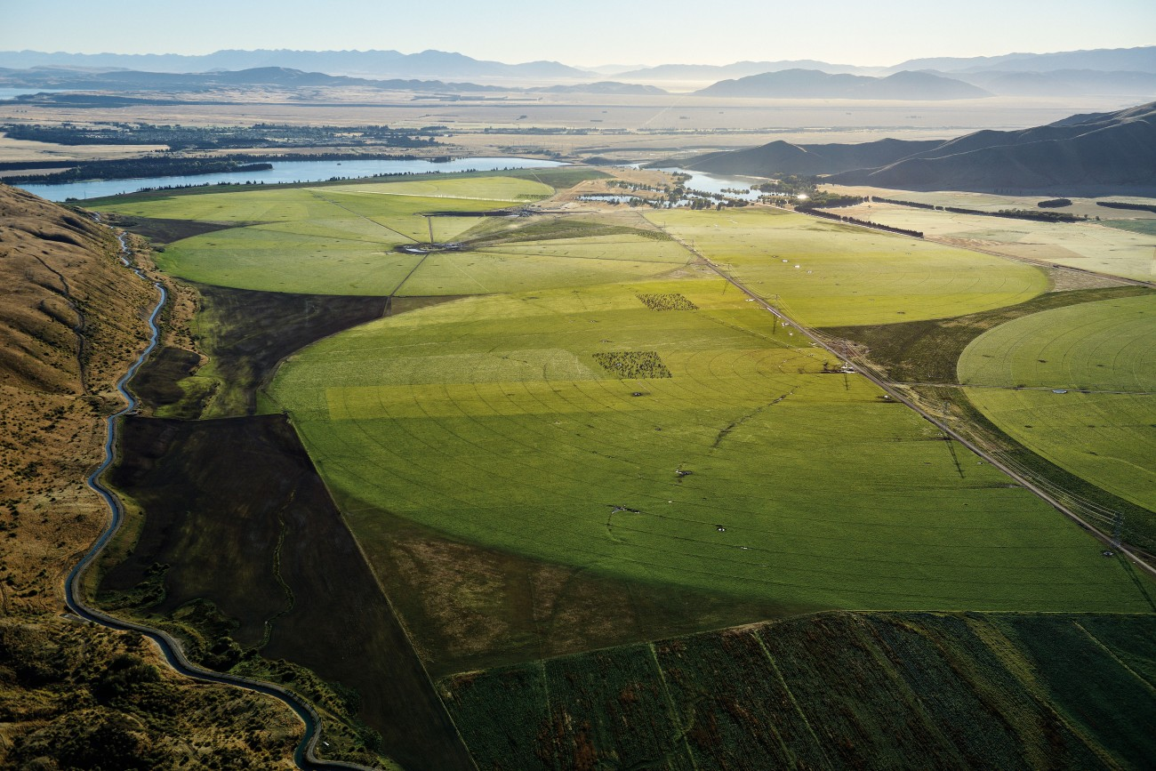 Real-life crop circles scribe the arrival of industrial irrigation in the Mackenzie Basin. Once the iconic preserve of high-country sheep farming, pivot irrigators now keep this driest of inter-montane valleys artificially wet, supporting a conversion from struggling meat and wool production to dairying which enjoys higher returns, for now. A Rabobank report last year warned that such contrived intensification was actually costing New Zealand farmers the advantage they once leveraged through a 'clean green' pasture-based brand.