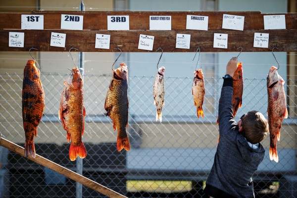 Twelve-year-old Jack Love hangs his prize catch among the winners.