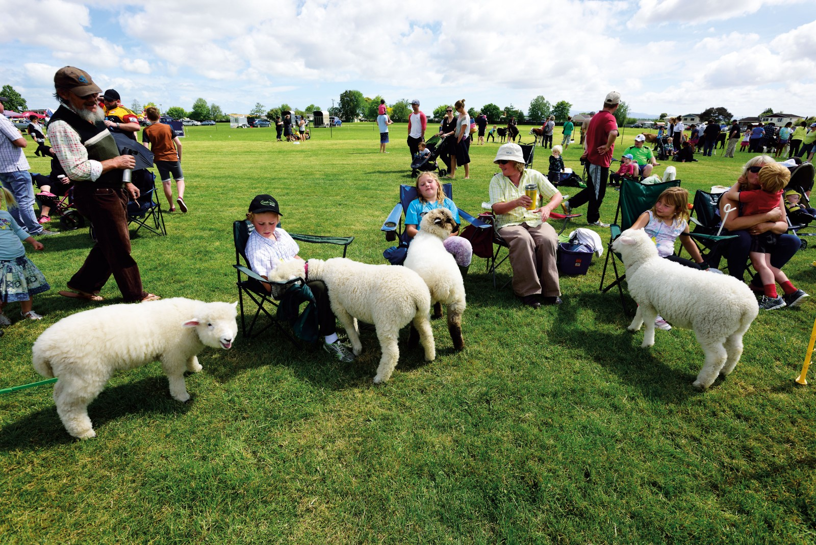 The Rural Show Day in the Ngatea domain draws in young handlers and calf club entrants from around the Hauraki Plains district, with sections for lambs and kid goats as well. Agricultural fairs are central to the character of rural towns such as Ngatea, though one local attendee commented that they used to see twice as many people at the event a decade ago, blaming the decline in farm labour and the rise of farm machinery.