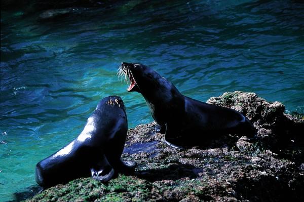 54_Seals_05