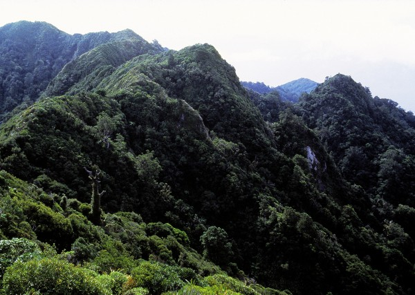 Volcanic eruptions one-and-a-half million years ago thrust Little Barrier's steep rocks above the waters of the Hauraki Gulf, and the relatively soft rocks have been heavily eroded since, producing the steep gullies and jagged peaks we see today.