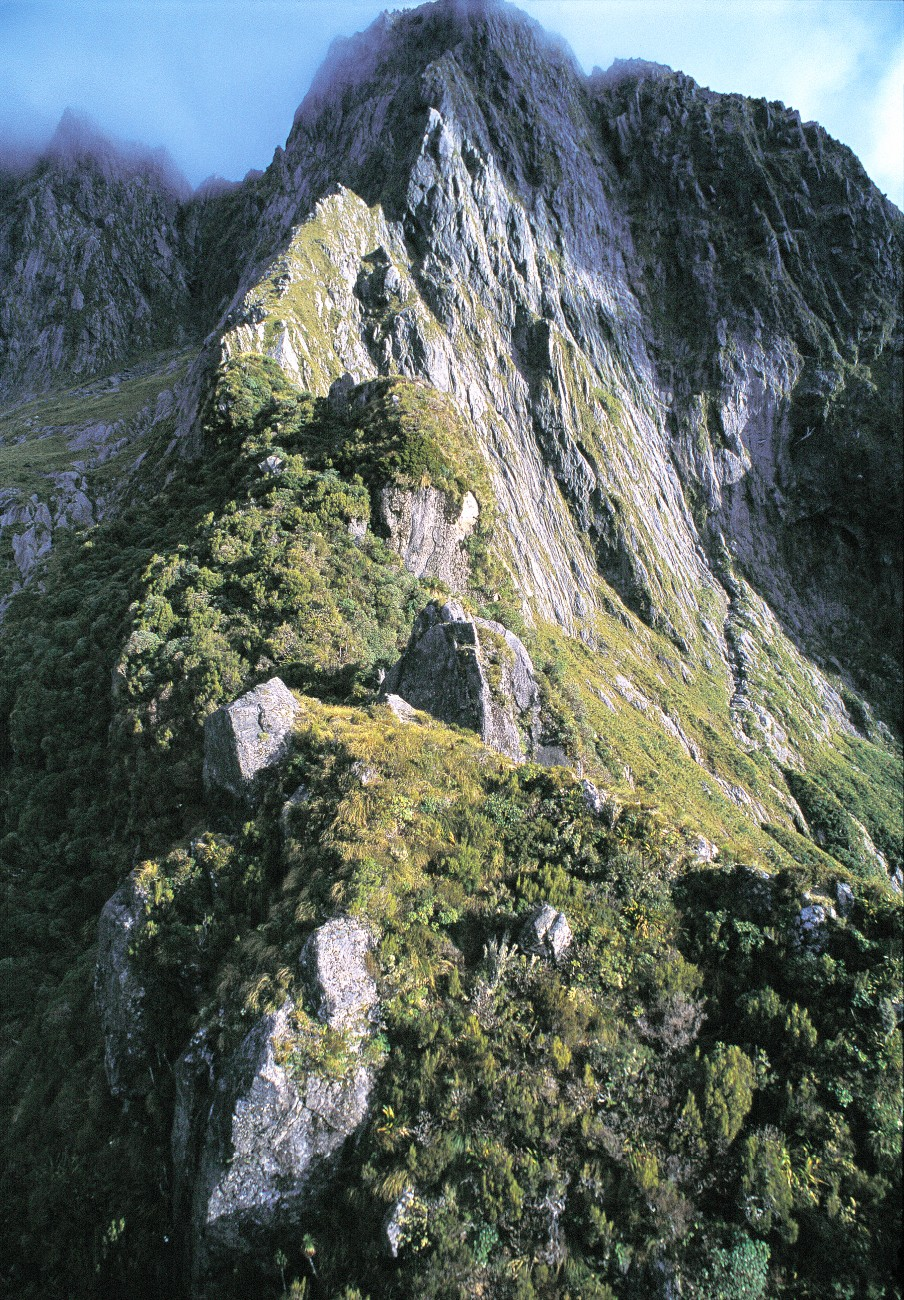 "In the 1970s, when the Wildlife Service made an all-out effort to find and save the vanishing kakapo, inaccessible parts of Fiordland-such as this spur named ""Kakapo Castle,"" south of Milford Sound-held the last remaining mainland birds, which all proved to be males."