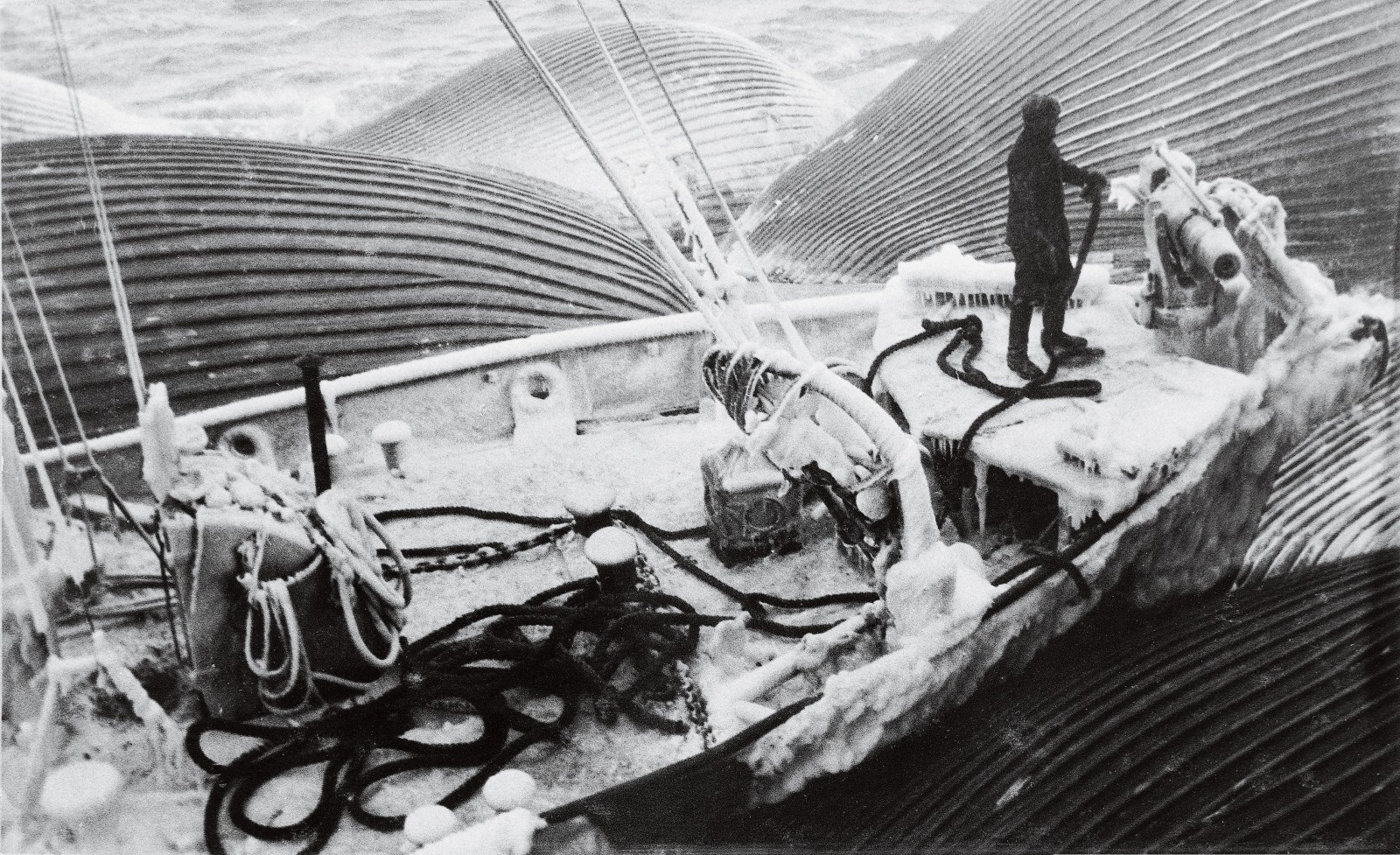 Although Antarctic conditions made whaling an even tougher proposition than normal—ropes and chains might have to be broken free of ice with sledge hammers and cold chisels—the abundance of whales in Antarctica more than compensated for the difficulties. With five to seven chasers bringing back a steady flow of carcasses, the factory ships could have trouble keeping up. The more quickly a whale was processed—less than 24 hours was the aim—the better the quality of the oil obtained and the more it fetched. Whaling was—and is—ultimately about money, though most whale products, such as baleen and oil, have been replaced by synthetics.