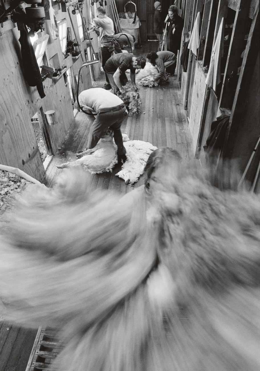 "With each sweep of the shears the fine merino fleece falls to the floor of the woolshed. It is scooped up by rouseabouts and spread on the sorting table, where the shorter wool is removed and any imperfections picked out before the fleece is baled. Some shearers use a ""bungy""—a support on springs—to spare their backs as they work."