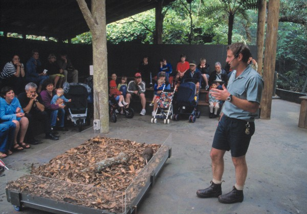 "Public awareness is important to the success of recovery plans for threatened species. Todd Jenkinson, of Auckland Zoo, introduces visitors to Curly, a tame kiwi, during one of the zoo's regular nature-encounter talks. Jenkinson says, ""You can see kiwi in a book or on television, but until you see a real one you don't really connect with them."""