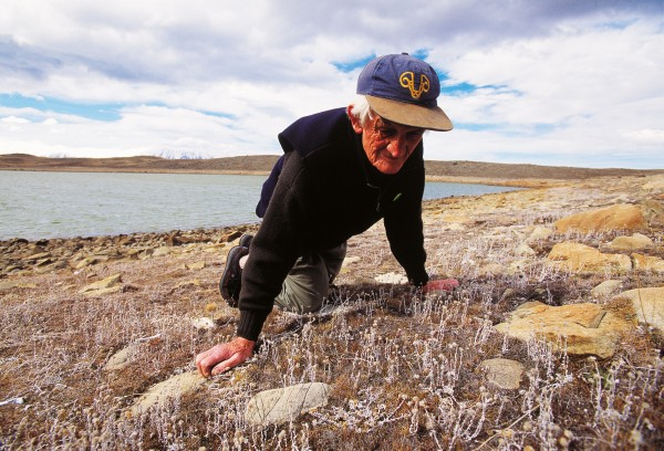 On Glenmore Station, near Lake Tekapo, a QEII covenant protects an area of 1000 ha, including a glacial moraine–tarn complex which, at first glance, seems devoid of life, but is blanketed with tiny plants. For the trust's high-country representative, Brian Molloy, here examining a native cudweed, the area is a trove of interesting species. Photographs are taken regularly of the more important plant communities, which include several unnamed native grasses, herbs and shrublets, to monitor changes over time.
