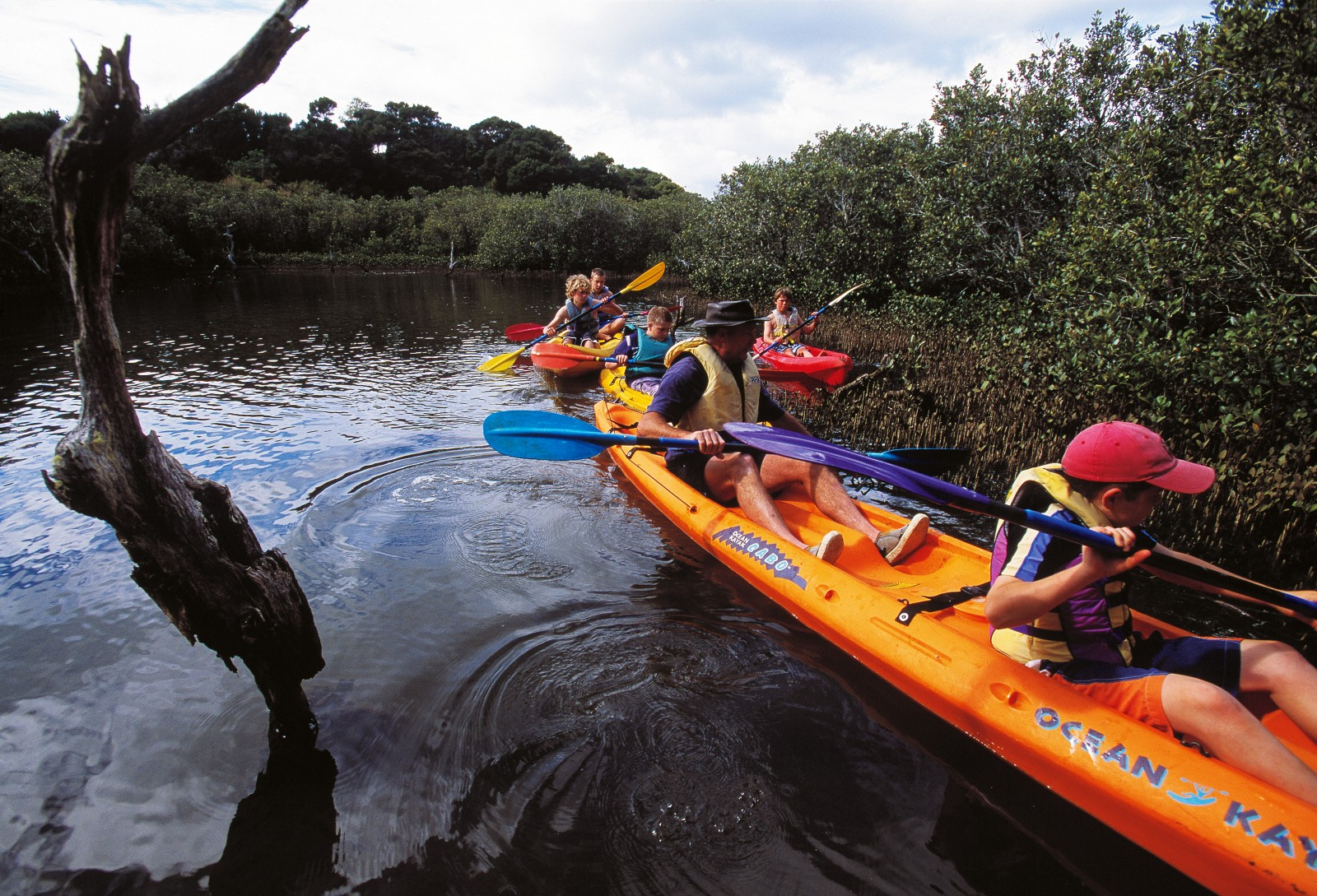 Schoolchildren attending camps at the QEII-run Aroha Island Ecological Centre, near Kerikeri, have a good chance of seeing kiwi by night and, while kayaking through the island's mangroves with manager Greg Blunden (opposite, in lead kayak), banded rails by day.