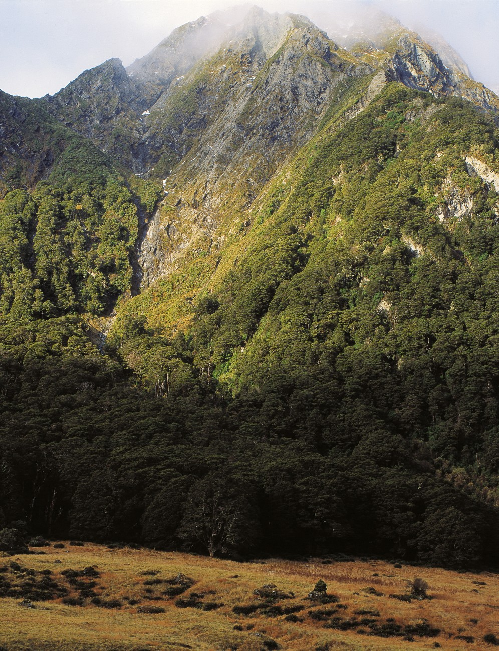 When New Zealand was covered in forest—as it was from 12,000 years ago until the arrival of humans—where did tussocks survive? One refuge was on rocky bluffs and slip faces in the mountains, such as here below Gillespie Pass, in the Wilkin River area of Mt Aspiring usually beat trees and shrubs in the race to colonise newly disturbed ground.