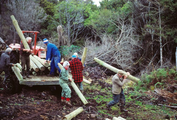 Because hoiho nest on the ground, their eggs and chicks are prime targets for predators such as stoats and feral cats. The nests are also vulnerable to trampling by livestock, which quickly destroy understorey vegetation. Here Southland Royal Forest and Bird Society members fence off a hoiho colony to try to increase breeding success.
