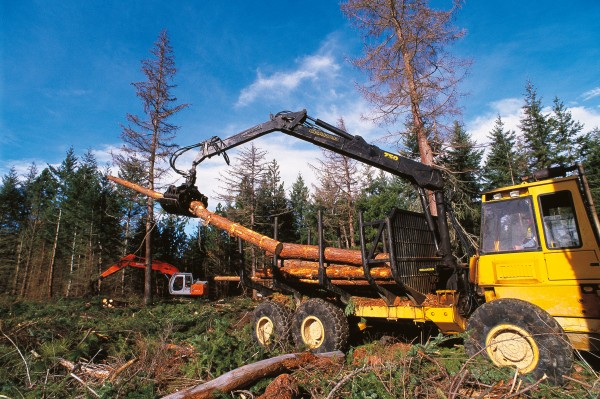 The main production species in Naseby Forest are Douglas fir and Corsican pine.