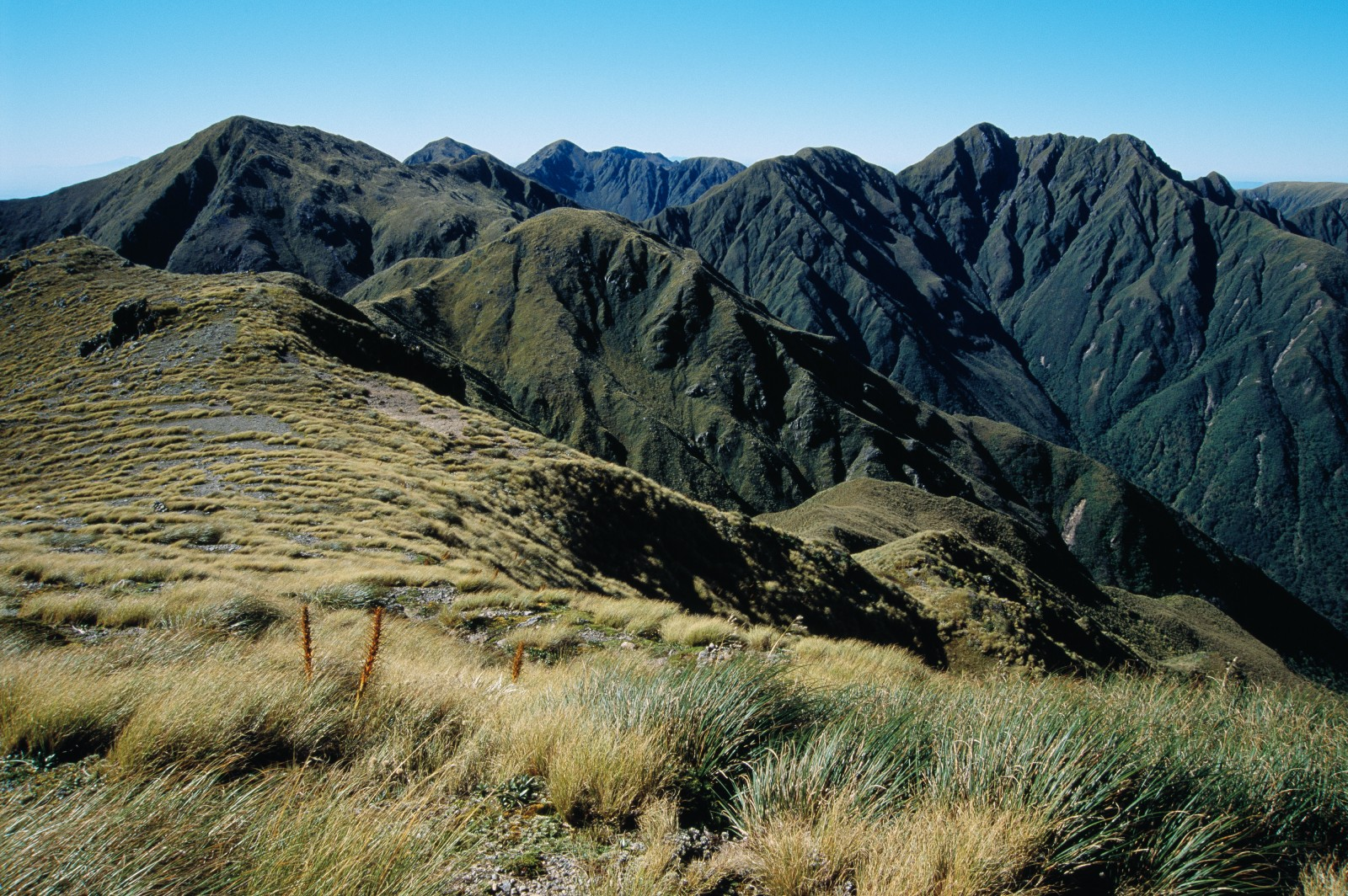 The northern Tararua Range is generally less trammelled than the southern part, offering experienced trampers numerous opportunities. While travel is easy on tussock slopes, off-track travel through extensive bands of sub-alpine scrub can be particularly arduous. This view from near the Waiohine Pinnacles shows several prominent Tararua peaks: (left to right) Arête, Dundas, Pukemoremore, The Twins and Bannister.