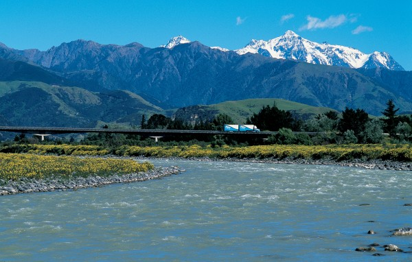 "In spring the Clarence delta is a blaze of lupins, forming a picturesque contrast with the grey rock of the Seaward Kaikoura Range and the snowcapped peaks of the Inland Kaikouras beyond. The tallest peak is Tapuae-o-Uenuku, called ""the Watcher"" by Captain Cook because it appeared to follow him as he sailed along the coast. On a clear day, ""Tappy,"" as the locals refer to it, is visible from Wellington."