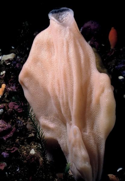 Porifera: sponge