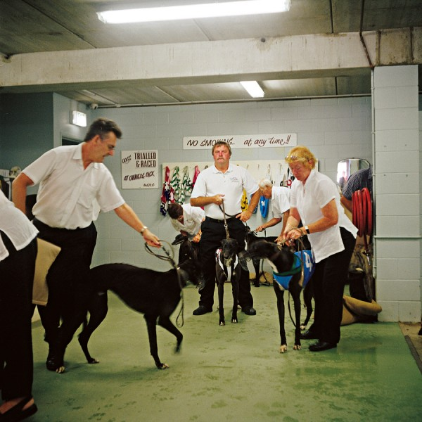 Dogs are also weighed before being led out to the track with their numbers on.