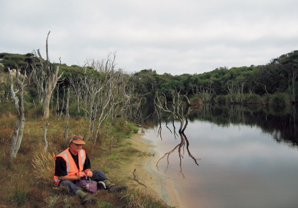 Temporary lakes that form between the bush and dunes provide habitats for birds such as shags and a range of wetland plants.