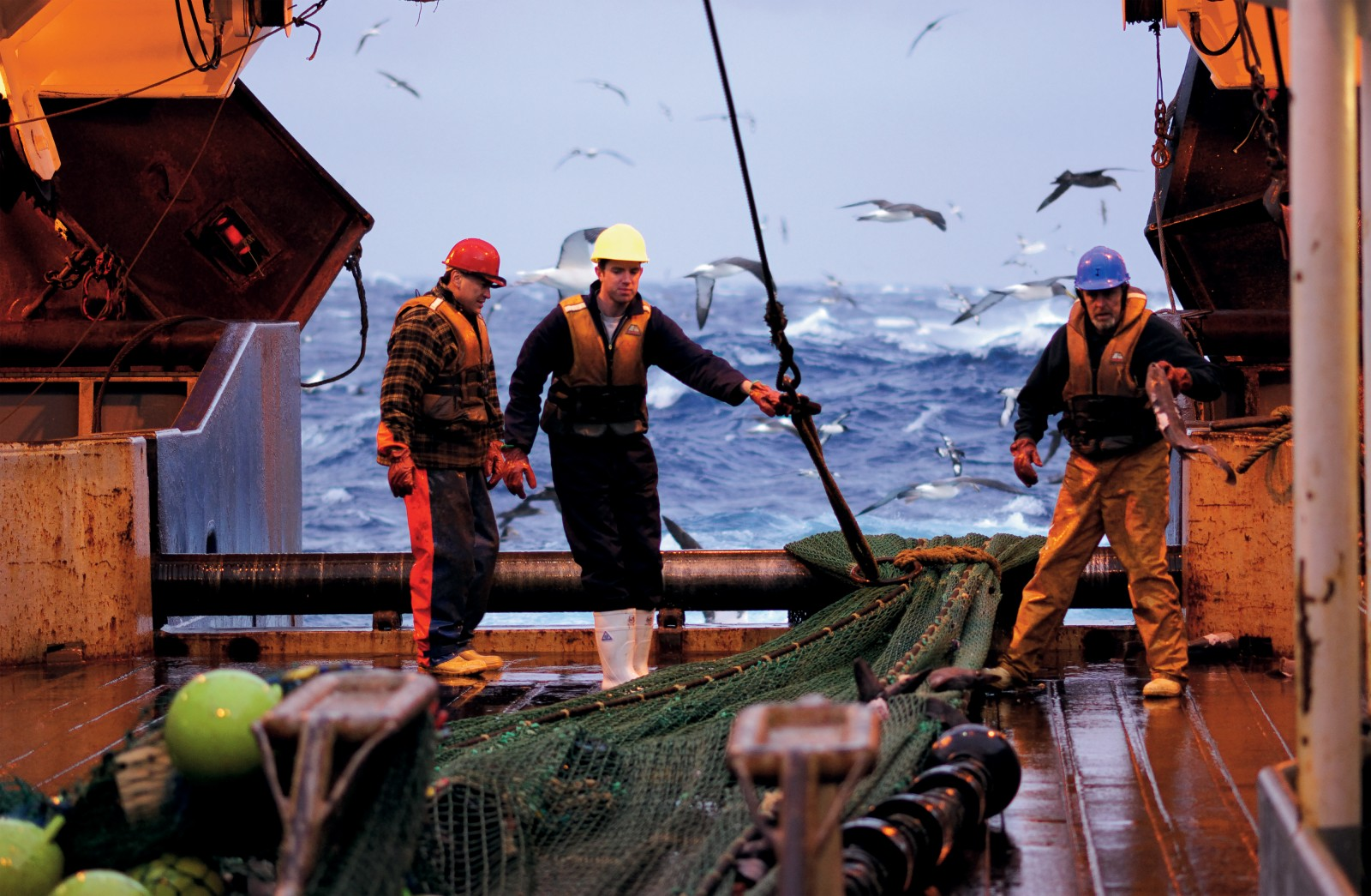 Anticipation runs high on the trawl deck as nets are hauled aboard, laden with residents of the deep. Equally eager for a taste of the action are the residents of the high seas; petrels, albatross and mollymawks flock to be first to the trawler's crumbs.