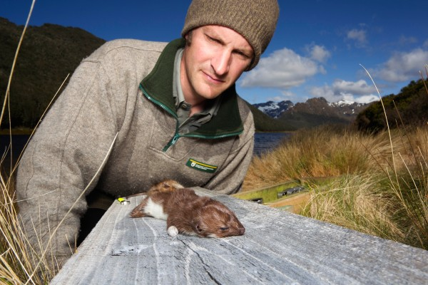 """""""Our new focus is on predator control,"""" says ranger Martin Genet. """"Particularly the stoat, which is the takahe's greatest foe."""""""
