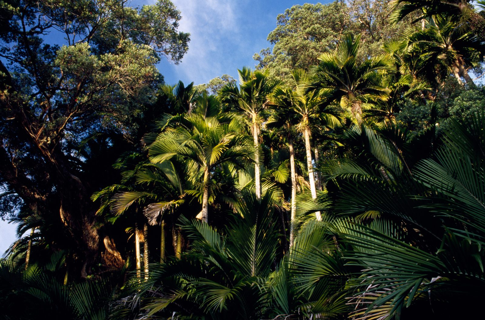 Pohutukawa and nikau palm are dominant components of Raoul Island vegetation.