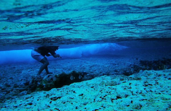 """Spear-wielding diver """"moon-walking"""" across the coral attempts to supplement the ocean fish catch with colourful reef-bugging species."""