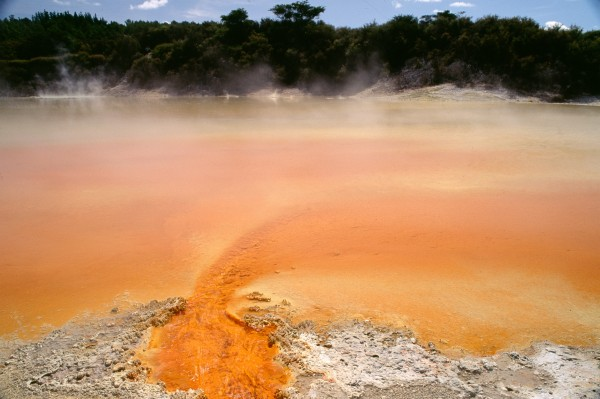 The waters of the Champagne Pool at Waiotapu are gently simmering, and contain a variety of extremely thermophilic archaebacteria. Such natural cauldrons, with their invisible fauna of biological curiosities, may one day be treasured as a biochemical resource, not just a tourist mecca.