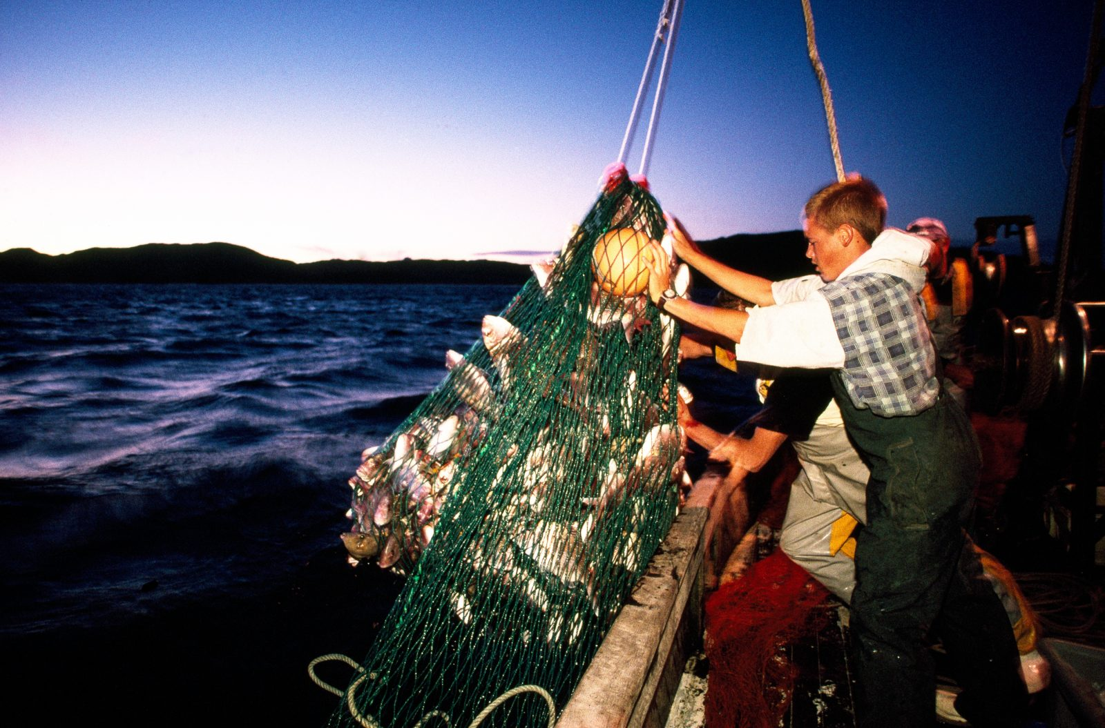As commercial and recreational fishers compete for diminishing numbers of the more popular inshore fish species, catches like this tonne of snapper being hauled aboard the Danish seiner Poseidon off Whitianga are an increasingly rare sight. The current cost of a tonne of snapper quota is $35,000, but has ranged as high as $60,000.
