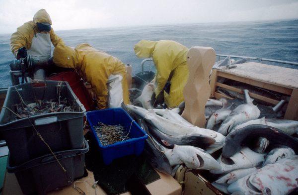 36_fishing_09