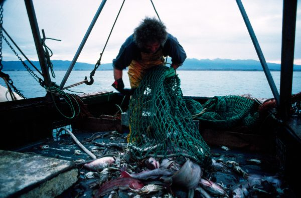 Unfortunately, small mixed catches are all too common: flounder, rig, red cod and crabs all pour on to the deck of the trawler Gazelle near Cape Foulwind. Trawlers come under strong criticism for the indiscriminate way they scoop up their catch. But for the fisherman, trawling is a cost-effective method, because it is less labour-intensive than longlining, and you don't need bait.