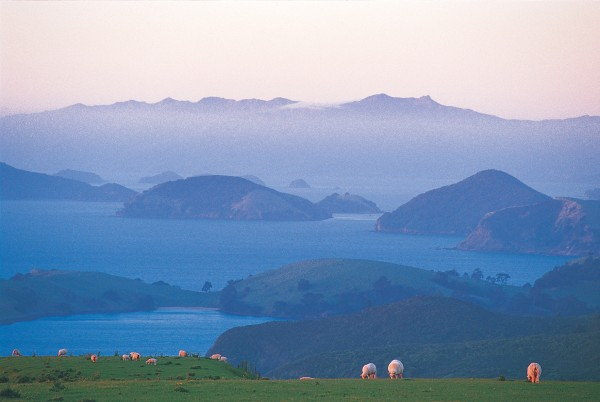 On the western side of the peninsula the sheltered waters around the many islands between Coromandel and Moehau (at 892 metres the peninsula's highest point, here visible above the clouds) support many mussel farms, now more lucrative and significant to the district's economy than sheep.