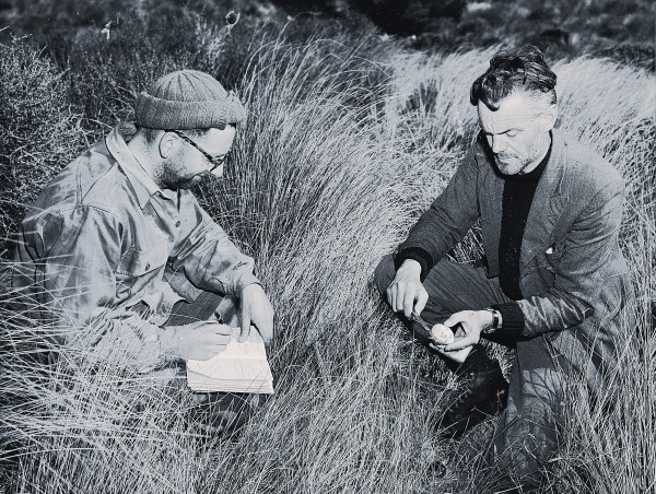Orbell's discovery triggered great scientific and public interest. Within two months, the first of many scientific expeditions was under way, and respected ornithologists such as Dr R. A. Falla (bottom, measuring egg) flocked to pay their respects, although conditions in the mountains (above) are not always clement for biologists-or for takahe.