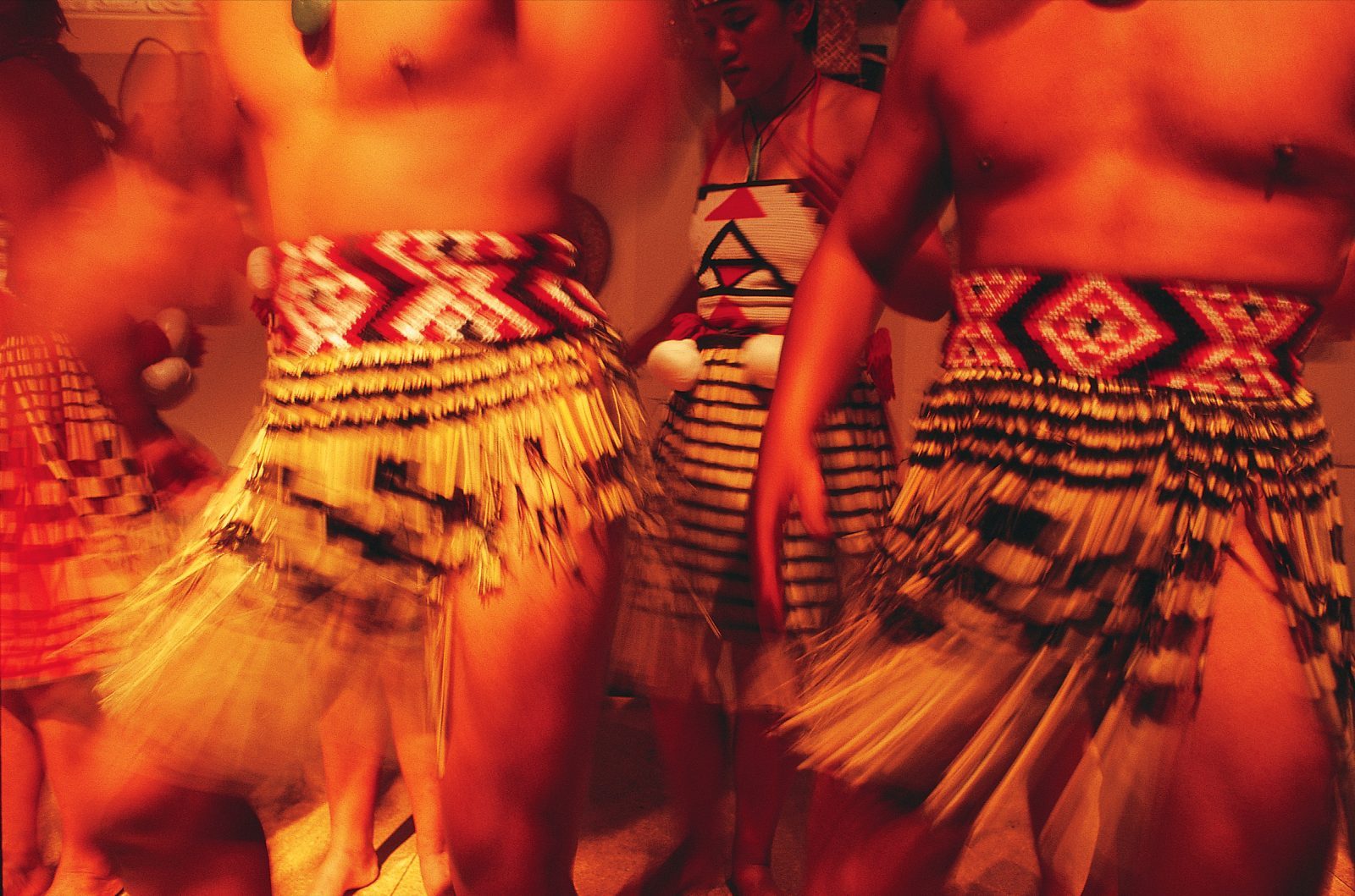 "Harakeke was the foundation of the traditional Maori wardrobe, crafted into a garment for every occasion. Piupiu, once standard attire for both sexes, were made from dozens of strips of flax, each of which rolls up into a slender brown cylinder when dry. A kilt consisting of such straws would be stiff and unyielding, so while the flax is still green sections of leaf matrix are scraped away to leave only the soft inner fibres—later dyed black—which enable the garment to swirl gracefully (the meaning of the word ""piupiu"") as the wearer moves."