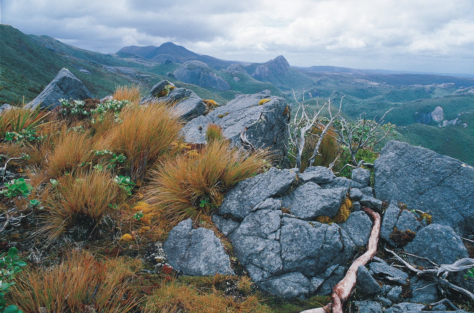 Screaming winds of the RoaringForties combined with shallow, rocky soils discourage any but the hardiest of plants from the higher levels of the Tin Range. Even the stiffly branching leatherwood-an impenetrable menace at lower altitudes-hunkers down here amongst the schist outcrops. The background granite domes protruding through a blanket of vegetation are the signature landscape of this area.