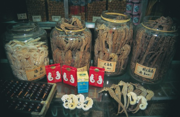"Medicinal use of seahorses, particularly in traditional Asian remedies, has exerted enormous pressure on seahorse populations around the world. In 1995, an estimated 20 million seahorses (some 56 tonnes) were harvested, for sale in various forms in major trading centres such as Hong Kong. The recent upturn in the Chinese economy has led some seahorse traders to observe that demand is ""unlimited."" Seahorse stocks, however, are not."