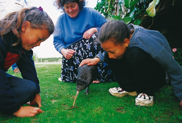 Snoopy, a North IsLand brown kiwi who Lost a Leg in a trap in I991, has gained a new career as an ambassador for his tribe. Few of us get the chance to stroke a Live kiwi, and for these chiLdren on an outing with the RoyaL Foundation for the Blind, the experience is especially meaningfuL