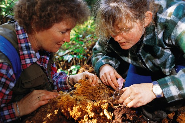 Peripatus researcher Dianne Gleeson (right) and her associate Grace Hall, both of Landcare Research, have gathered specimens from throughout New Zealand. Gleeson believes there are as many as 30 species in this country. Worldwide there are several hundred.