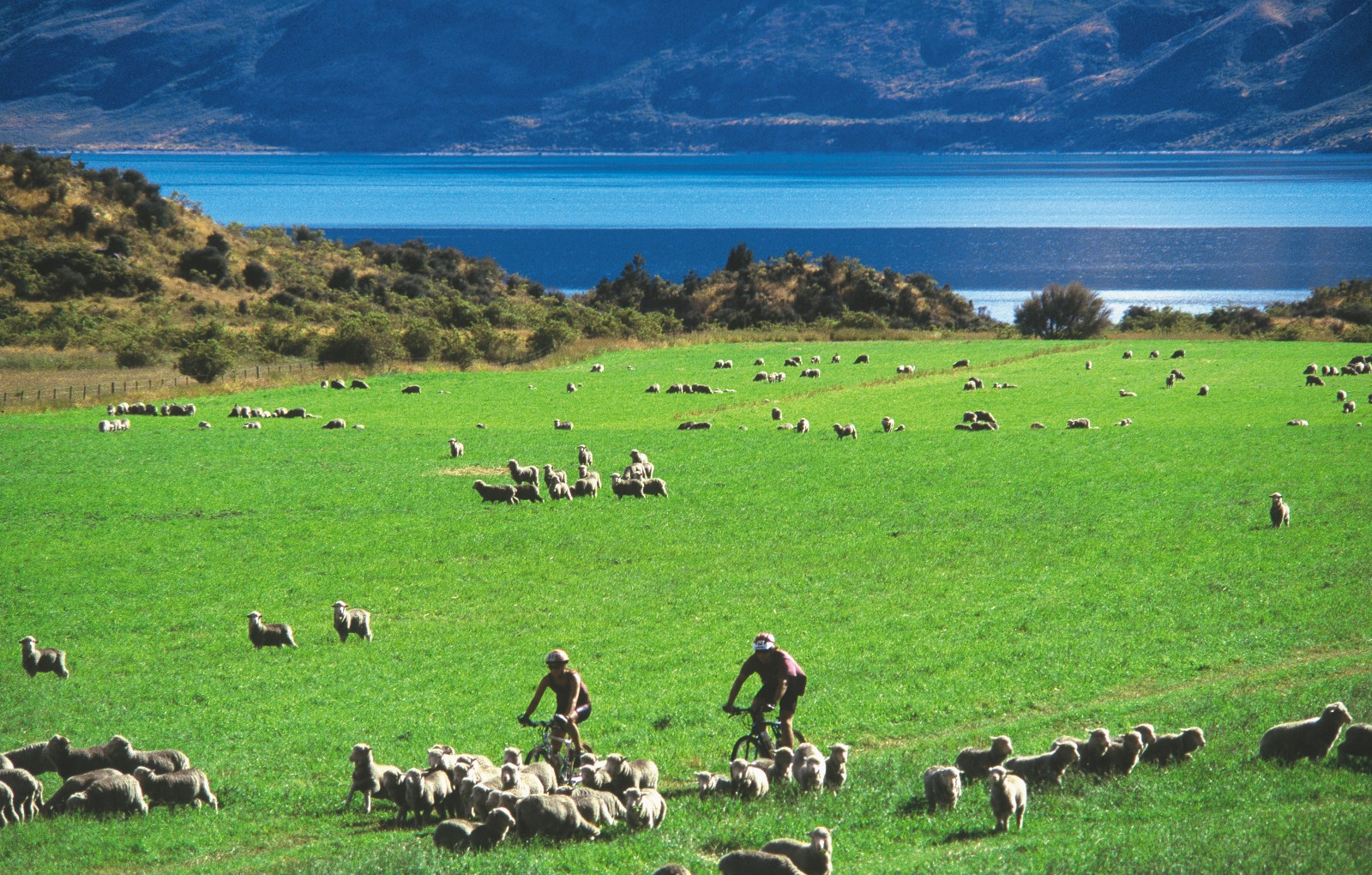 In outdoor circles, New Zealand is becoming as well known for its mountain biking as its sheep. And why not? We have the wide-open spaces, the climate and the trails to create pedalling perfection. In a place such as Wanaka, flanked by lake, mountain, forest and field, the multifaceted pleasure of a ride is always close at hand.