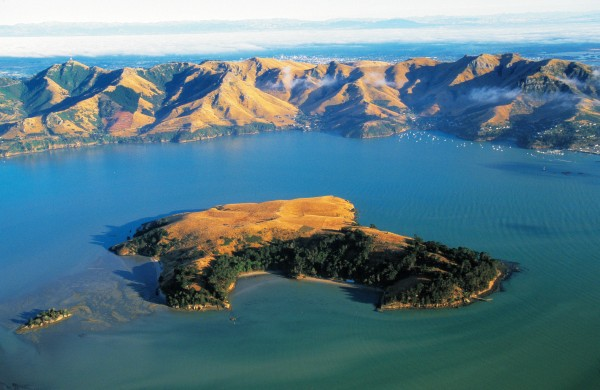 Although surrounded by the waters of Lyttelton Harbour, in summer Quail Island's 80 ha become as dry as the rest of Canterbury. Lyttelton lies just to the right of the picture and central Christchurch can be glimpsed over the Port Hills.
