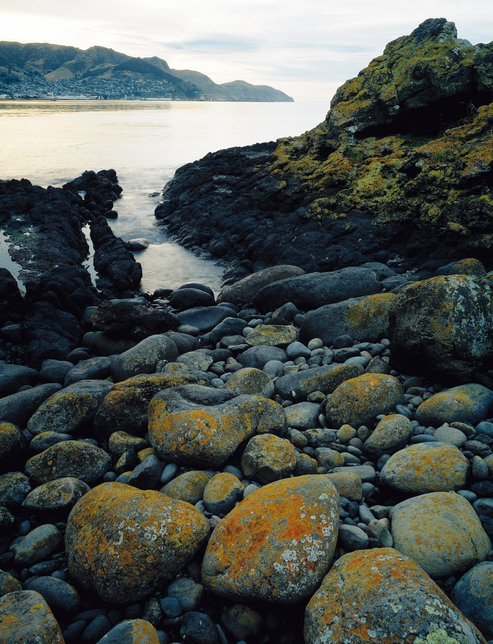 the ghosts of quail island new zealand geographic
