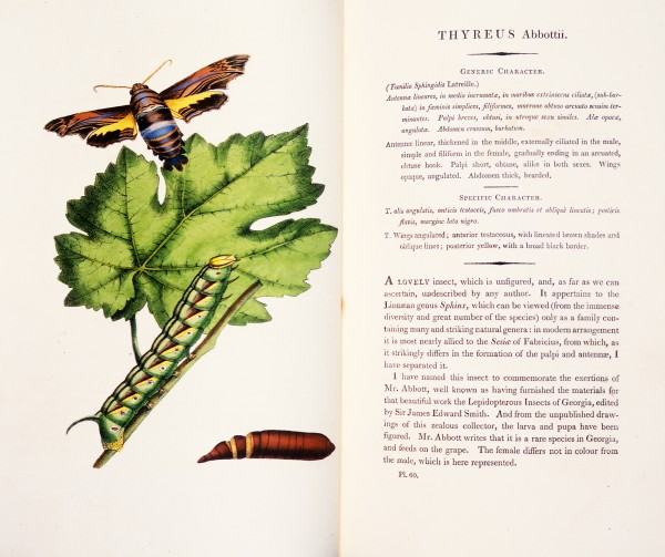 In England, Swainson had been the author of many books, producing both text and illustrations. As this was well before the advent of colour printing, Swainson usually hand-coloured the illustrations in each copy himself, but he was less fastidious about text, which often contained errors and mistakes.