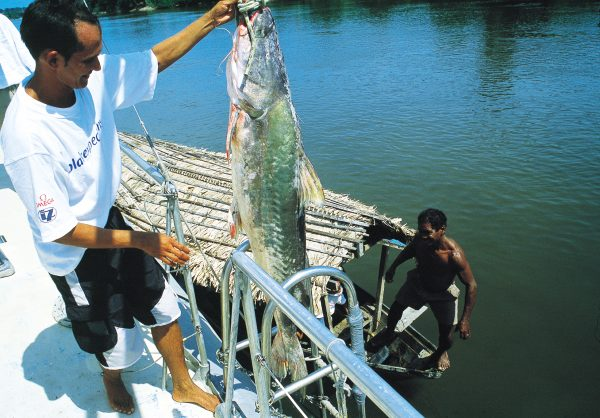 Brazilian chef Paulo Matos inspects a catfish offering from local fishermen. One of the environmental issues Blake sought to address was the collapse of global fisheries—not, he believed, a problem that could be laid at the door of subsistence fisheries, but of commercial fishing operations.