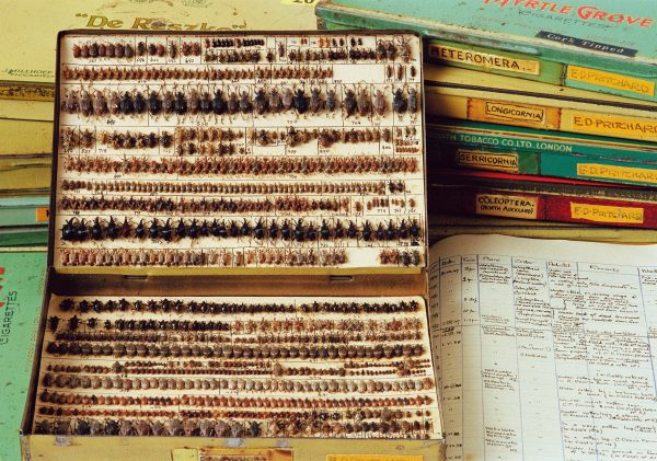 A collection of 5500 native weevils and beetles from the northern North Island, built up by school teacher Eric Pritchard (1909-1997), resides in 25 cigarette tins and is accompanied by extensive notes.