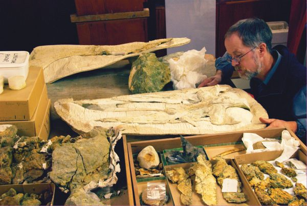 One of Professor Ewan Fordyce's favourite places is the basement of the Geology Building at Otago University, amid the collection of vertebrate remains. Plaster is used both for making casts and supporting fragile specimens.