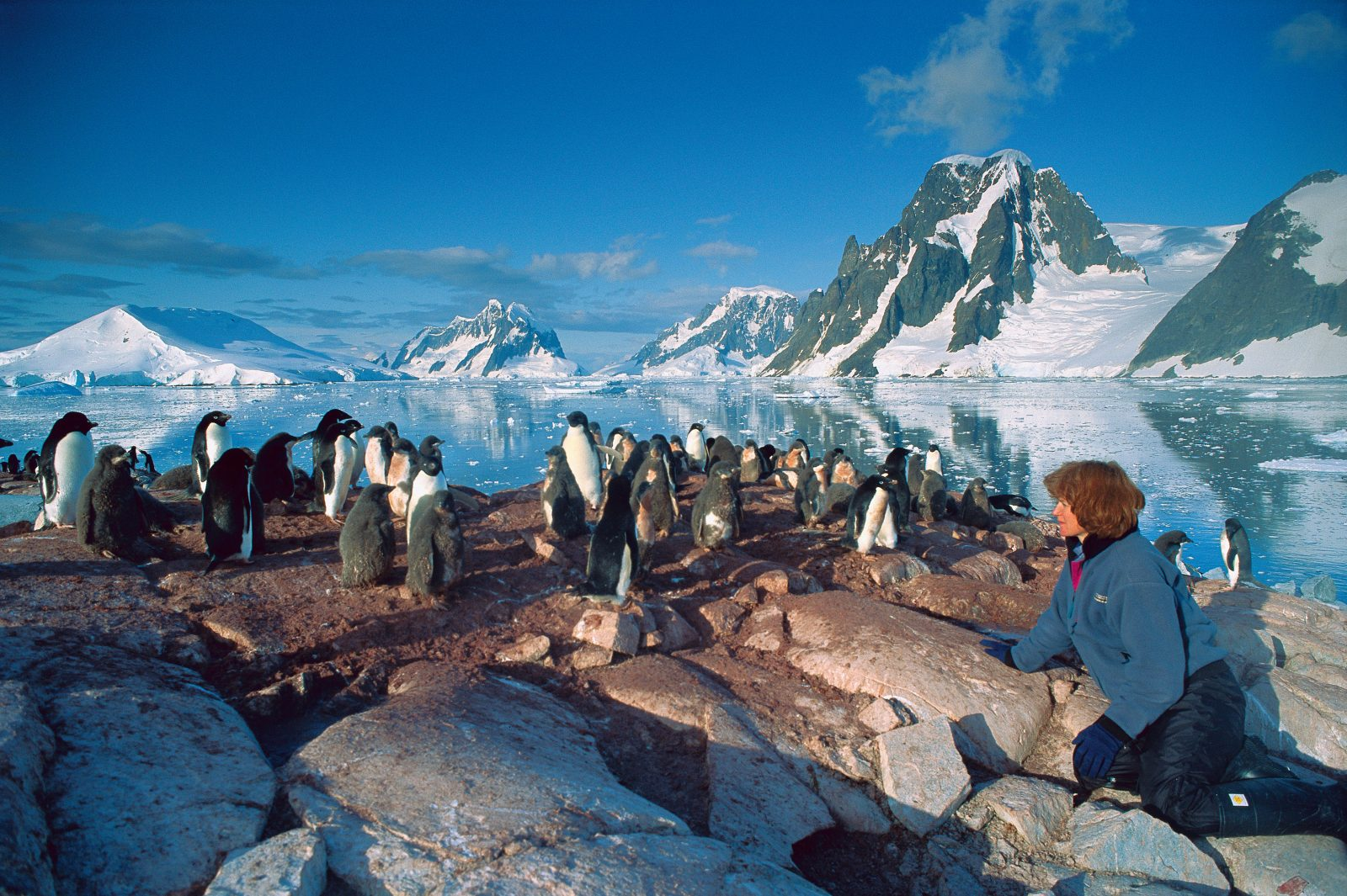 One of the most visited spots in Antarctica, Petermann Island has changed significantly in recent years, with Adelie penguin numbers declining rapidly and gentoo penguins replacing them.