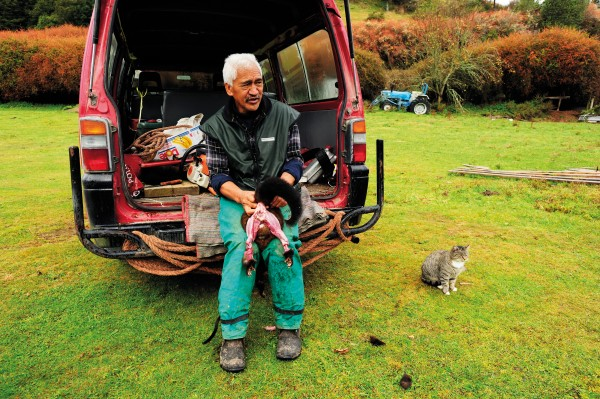 """Possums bring in pocket money for Ruatahuna kaumatua Rongonui (""""Ron"""") Tahi and his family. Although a curse to the forest, the introduced marsupials have been a godsend to the Tuhoe economy, which is marginal in a place as isolated as Ruatahuna. Geographically remote it may be, but Ruatahuna is central in Tuhoe tradition. The story is told of a delegation of Maori chiefs who came to Ruatahuna and said, """"Nga Puhi is the tail of Maui's fish. Ngati Awa is the fish's mouth. Taranaki and Ngati Porou are the fins. Who are you?"""" The people replied: """"We are te manawa o te ika a Maui, the heart of Maui's fish."""""""