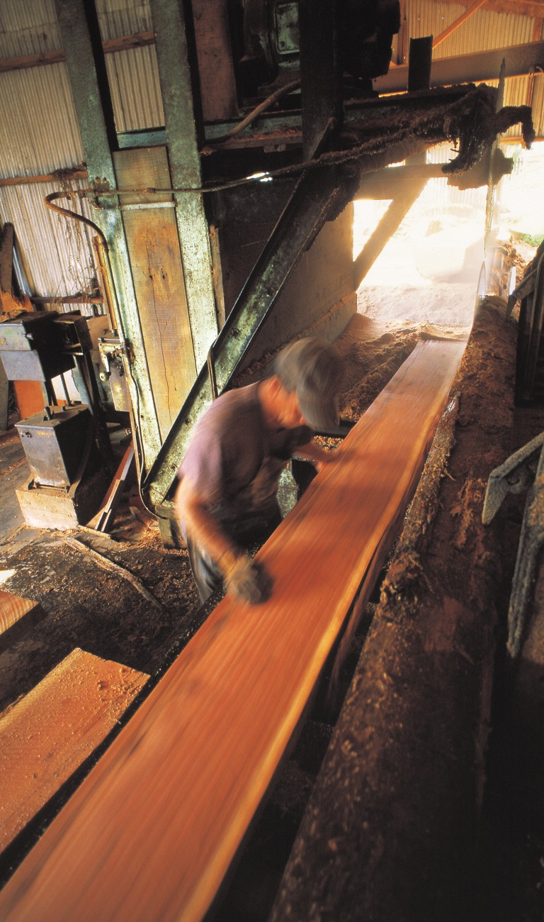 At Lyall Dangen's Ranui mill in West Auckland, a flitch of Sydney blue gum is inspected for quality after being cut from the saw-log.
